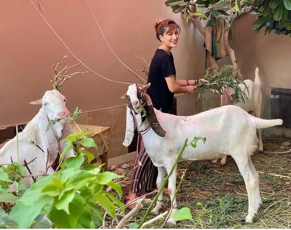 Mehwish Hayat Demands Closure of the Zoos in Pakistan