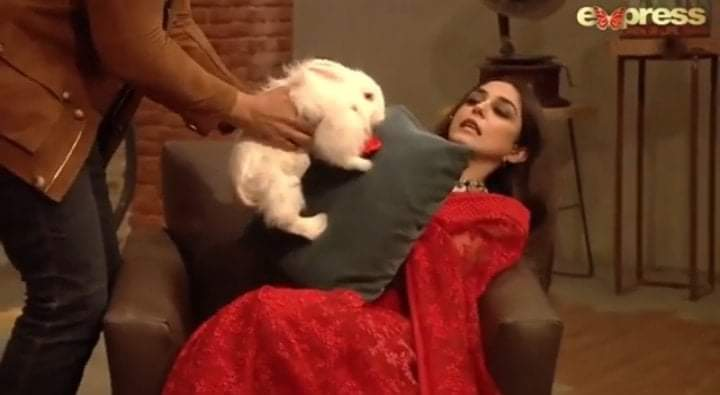 Online Petition To Stop The Use Of Rabbits In Time Out With Ahsan Khan