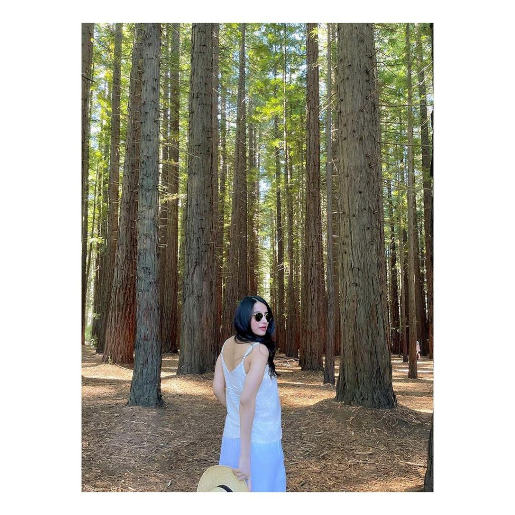 Saniya Shamshad's Pictures From Redwood Forest